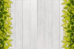 leaf border against white wood panel background Stock Photography