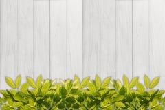 leaf border against white wood panel background Stock Photos