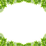 Leaf Border Royalty Free Stock Images