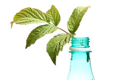 Leaf and bottle Stock Photo