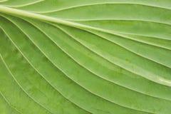 Leaf bottom Royalty Free Stock Image