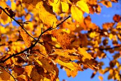 Leaf, Branch, Autumn, Yellow Royalty Free Stock Photo