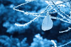 Leaf and branch covered with hoarfrost royalty free stock photos