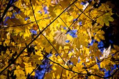 Leaf, Branch, Nature, Yellow royalty free stock image