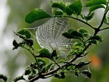 Leaf, Branch, Spider Web, Invertebrate Royalty Free Stock Photo
