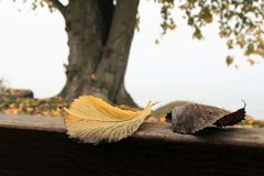 Leaf, Branch, Stock Photography, Twig