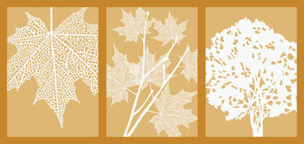 Leaf, Branch and Tree Royalty Free Stock Photos