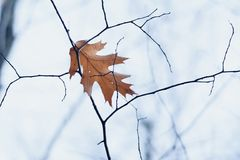 Leaf, Branch, Tree, Twig Stock Photography