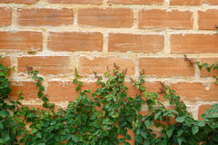 Leaf on brick wall background Royalty Free Stock Photography
