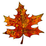 Leaf with Royalty Free Stock Image