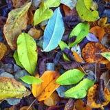 Leaf Brilliance Stock Images