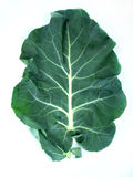 Leaf of  a broccoli Royalty Free Stock Images