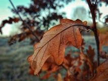 Leaf Stock Image