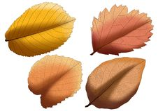 Leaf Brown paint and Brown colour on white background stock illustration