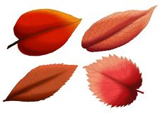 Leaf Brown paint and Brown colour on white background vector illustration