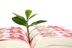 Leaf bud growing out of a book covered with Chinese Yuan Stock Photo