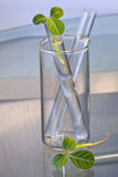 Leaf buds in test-tube Stock Photos