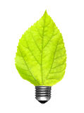 Leaf bulb Royalty Free Stock Photos