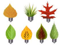 Leaf bulbs. Various leaves in bulbs - green energy concept Royalty Free Stock Image