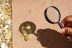 Leaf Burned by Convex Lens. Outdoor science experiment of the leaf burned by convex lens. (Pic3 stock photo
