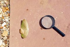 Leaf Burned by Convex Lens. Outdoor science experiment of the leaf burned by convex lens. (Pic1 stock image