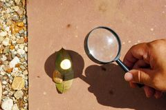 Leaf Burned by Convex Lens. Outdoor science experiment of the leaf burned by convex lens. (Pic2 stock image