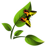 Leaf and Butterfly Royalty Free Stock Photos