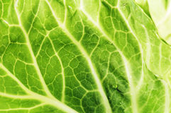 leaf of cabbage. background Royalty Free Stock Image