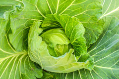 Leaf cabbage vegetable Stock Photo