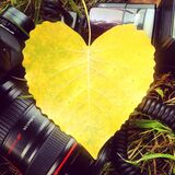 Leaf on camera Royalty Free Stock Images