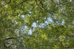 Leaf Canopy Stock Images