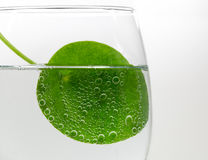 Leaf in Carbonated Water Royalty Free Stock Image