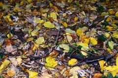 Leaf carpet royalty free stock photo