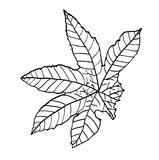Leaf of castor, vector illustration Stock Photos