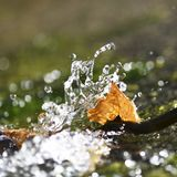 Concept of freedom. Leaf caught in flowing cool spring water on a bright summers day , concept of freedom, room for text overlay, bokeh background for copy space stock images