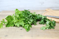 Leaf celery,chervil and Coriander in a wooden background. Pictured Leaf celery,chervil and Coriander in a wooden background Stock Image