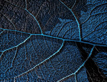 Leaf cell by cell. Blue leaf details like cell royalty free stock photography