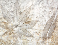 Leaf Cement Stock Images