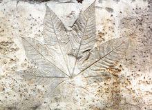 Leaf Cement Stock Photo