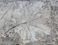 Leaf on cement texture background Royalty Free Stock Photography