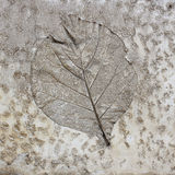 Leaf on cement texture background Royalty Free Stock Photo