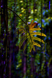 leaf cenote Stock Images
