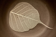Leaf in the ceramic. Transparent leaf in the ceramic Royalty Free Stock Images