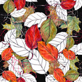 Leaf cherry , watercolor, pattern seamless Stock Photos