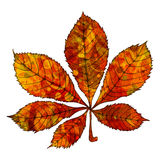 Leaf chestnut. Bright red chestnut leaf with veins like watercolor on a white background. Vector illustration Royalty Free Stock Images