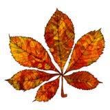 Leaf chestnut Royalty Free Stock Images
