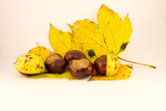 Leaf and chestnuts. Chestnuts on white background, isolated Royalty Free Stock Photography