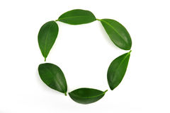 Leaf circle Royalty Free Stock Photos
