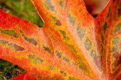 Leaf Close up Stock Photos