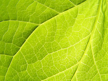 Leaf: Close up Stock Image